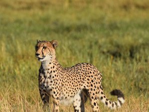 13 Day Venturesome Safari in Botswana