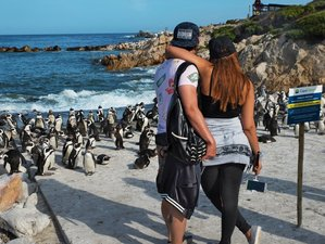 7 Days Best of Cape Town, Winelands & Garden Route Safari in South Africa