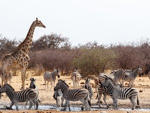 10 Days Camping Safari in Namibia
