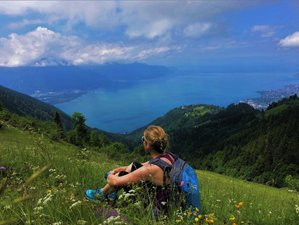 3 Day Narcissus Flower Therapy, Forest Bathing, and Meditation Retreat in Caux, Canton of Vaud