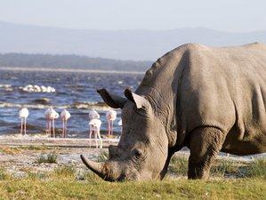 6-Daagse Big 5 Safari in Samburu, Lake Nakuru en Masai Mara in Kenia