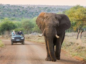 4 Days Unique and Classic Safari in Hluhluwe, South Africa