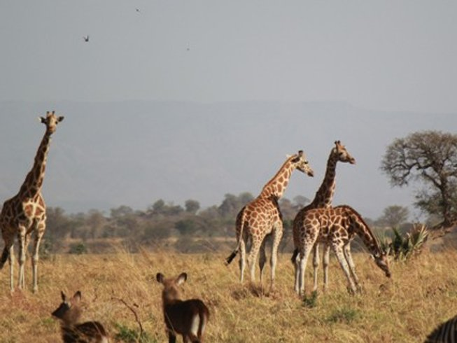 5 Days African Safari in Kidepo Valley National Park