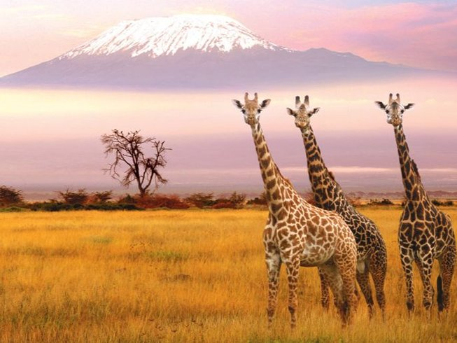 7 Days Machame Route Kilimanjaro Safari and Trekking