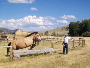 4 Days Ranch Vacation with Roping, Cattle Work and Horseback Riding in Montana, USA