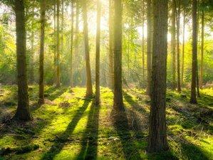 3-Daags Yoga en Gezondheidsweekend voor Mensen met Kanker aan de rand van de Veluwse Bossen