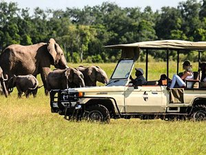 10 Days Kenya Safari in Top Luxury Lodges and Camps