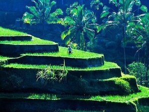 8 Days Bali Detox Reset Yoga Retreat in Bali, Indonesia