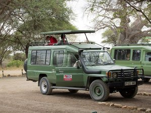 7 Days Budget Safari in Tanzania from Tarangire to Ngorongoro