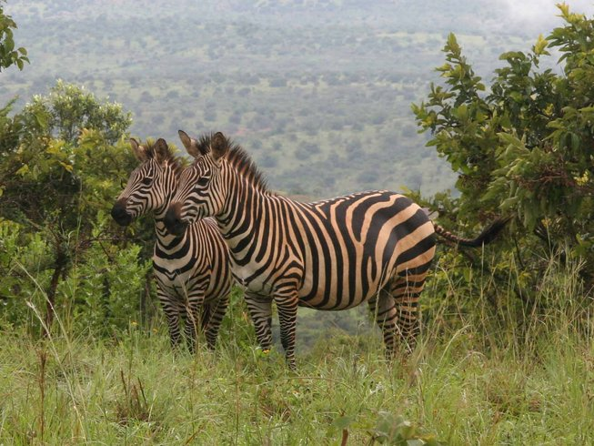 4 Days Wildlife and Gorilla Safari in Rwanda