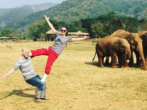 11 Day Service Week at Elephant Nature Park and Yoga Holiday in Chiang Mai