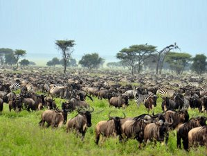 7 Days Private Safari Tanzania