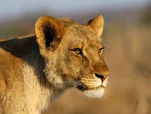 3 Days Fascinating Safari in Zimbabwe and Botswana