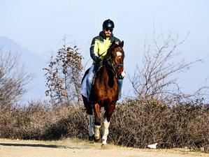4 Days Beginner Horse Riding Holiday in Lake Kerkini, Greece