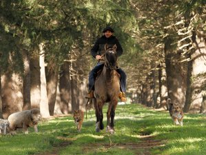2 Day Authentic Argentinian Pampa Estancia and Horseback Riding Vacation in Buenos Aires Province