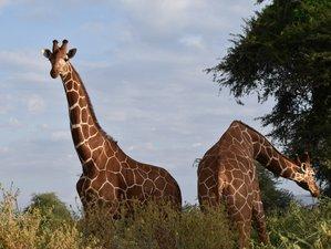 10 Days Beach and Safari Tour in Kenya