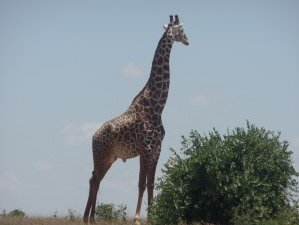 8 Days Safaris in Kenya