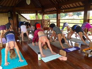 21 Days 200-hour Vinyasa Yoga Teacher Training in Bali