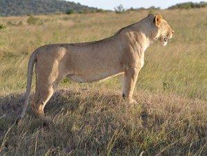 2 Days Amboseli National Park Safari in Kenya