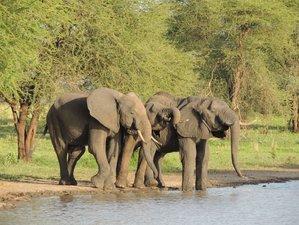 5 Days Tarangire, Serengeti, and Ngorongoro Conservation Area Safari in Tanzania