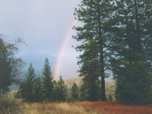 4 Day Medicine Flower Retreat to Detox in the Scenic Sierra Foothills of Northern California