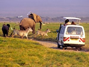 2 Days Overnight Safari Amboseli National Park, Kenya
