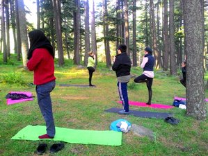 6 Day Detox Mind-Body: Meditation and Yoga Retreat in Palampur (HP)
