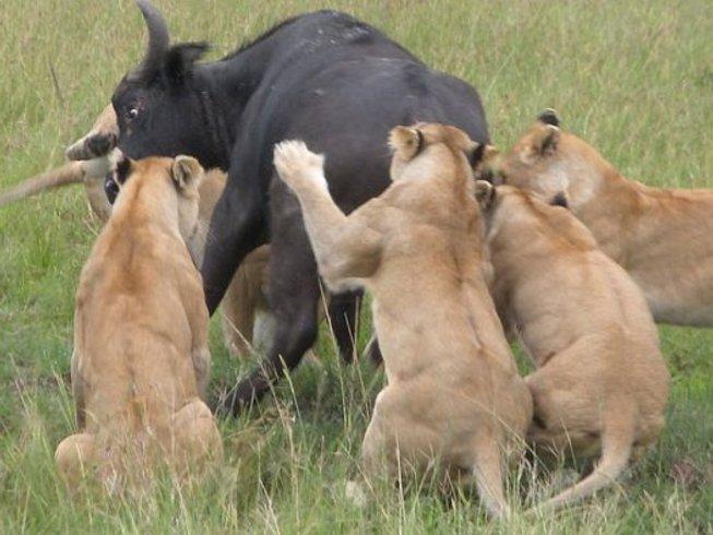 7 Days Budget Safari in Kenya