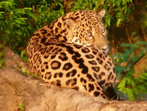 9 Day Boat Trip and Wildlife Tour in Manu National Park, Cusco