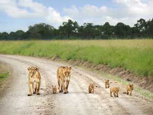 6 Days The Best Safari in Kenya