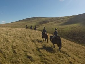 3 Days Adventurous Western Horse Riding Holiday for Experienced Riders in Devon, England, UK