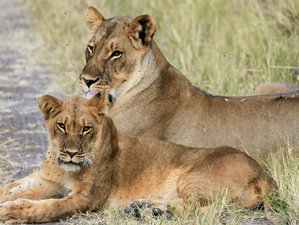 3 Days Maasai Mara Budget Safari Tour Trip Kenya
