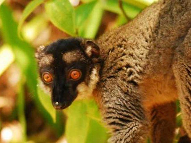16 Days Primate Safari in Madagascar