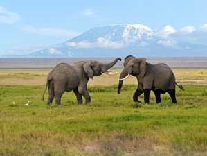 7 Days Adventure Safari Tour in Kenya