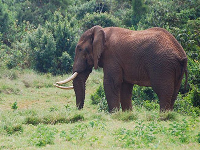 3 Days Aberdare National Park Safari in Kenya