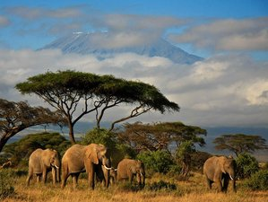 6 Days Hidden Treasures of Kenya Safari