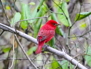 9 Day Wonderful Birdwatching Expedition in Ecuador