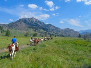 5 Day Wilderness Horseback Riding and Camping Trip in The Bob Marshall Wilderness, Montana