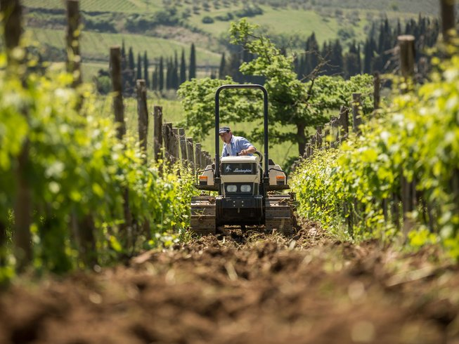 5 Days Chianti Food Vacations, Oil & Wine Tour in Italy