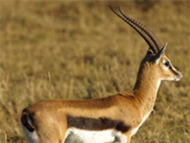 8 Days Kenya Wildlife Safari