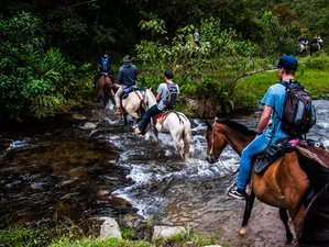 3 Day Coffee Farm Tour and wax palm forests Horse Riding Holiday in Salento, Colombia