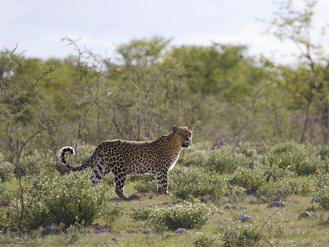 12 Days Budget Zambia and Namibia Safari