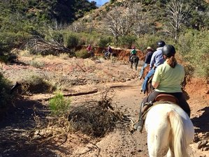 5 Days Horsemanship and Cowboy Skills Camp in Arizona