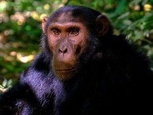 5 Days Chimpanzee Trekking Western Tanzania Safari