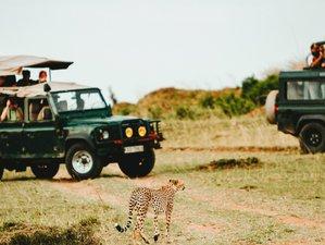 Theme: Classic Safaris