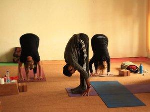 25 Day 200 Hours Yoga Teacher Training in Dharamshala with Mahi Ji