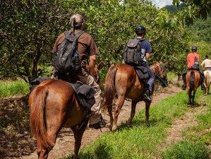 2 Days Rainforest Horseback Riding Adventure at Sleeping Giant Rainforest Lodge, Belize