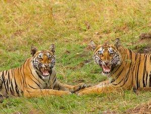 7 Days Unforgettable Safari in India