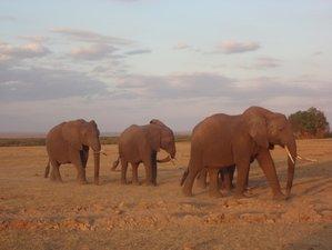 8 Days Luxurious Safari in Kenya