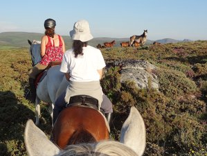 5 Days Wolf and Wild Horse Territory Horse Riding Holiday in Peneda Geres National Park, Portugal